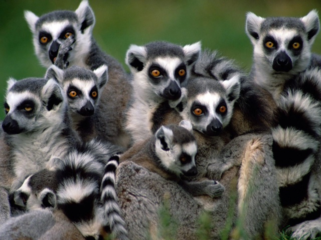 Madagaskar - wyspa lemurów i baobabów