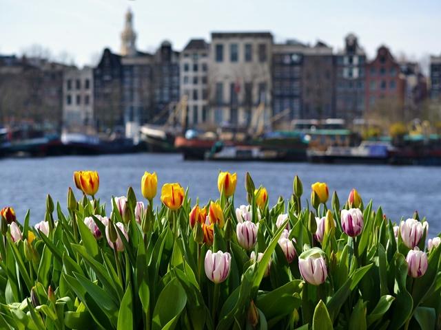 Majówka w Amsterdamie - 5 dni (samolotem z Krakowa)