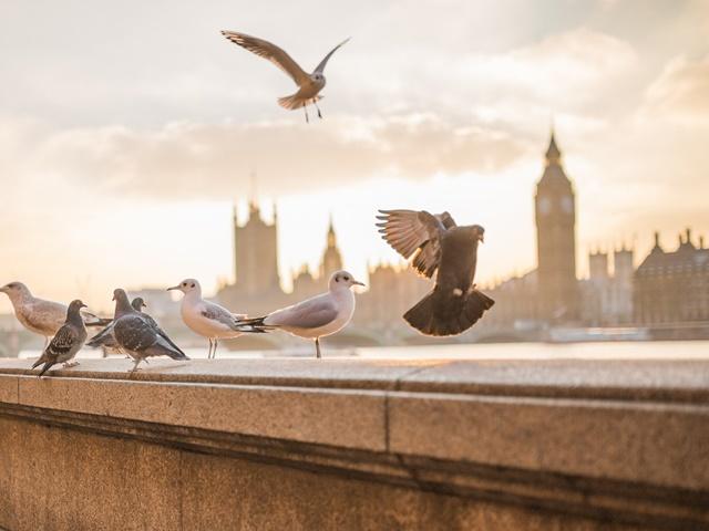 Harry Potter i magia Londynu
